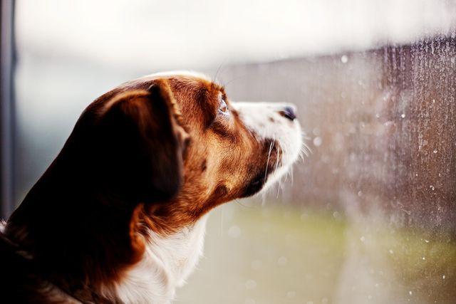 собака в дождь