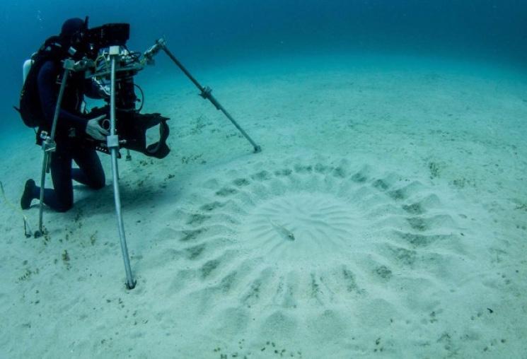 Съемки видео процедуры творения рыбой архитектором