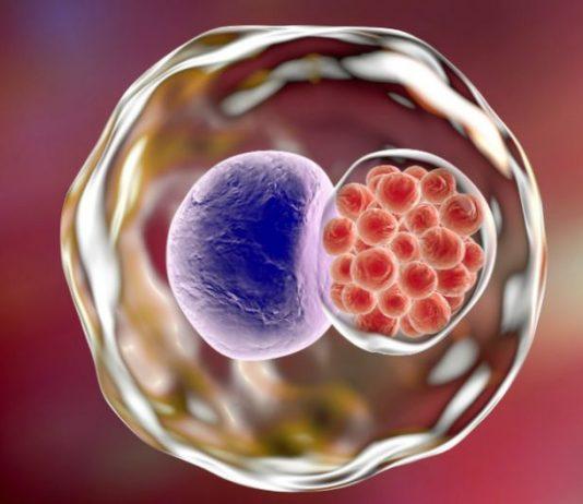 Вакцина от хламидиоза прошла первые клинические испытания