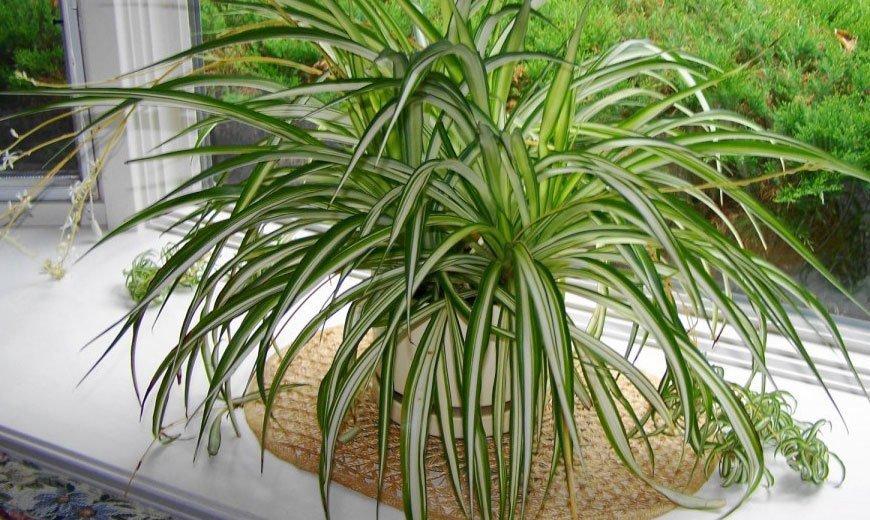 Топ-10 самых неприхотливых комнатных растений