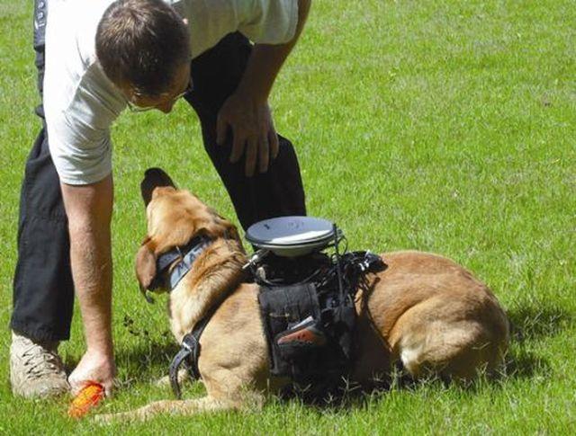 дистанционное управление собакой