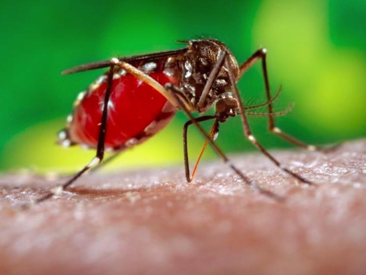 zarazheniye-virusom-zika-ot-ukusa-komarov.jpg