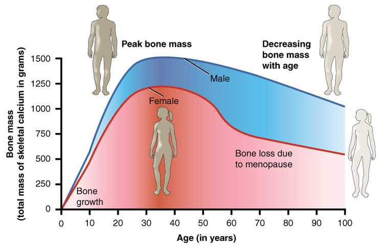 Зависимость костной массы от возраста