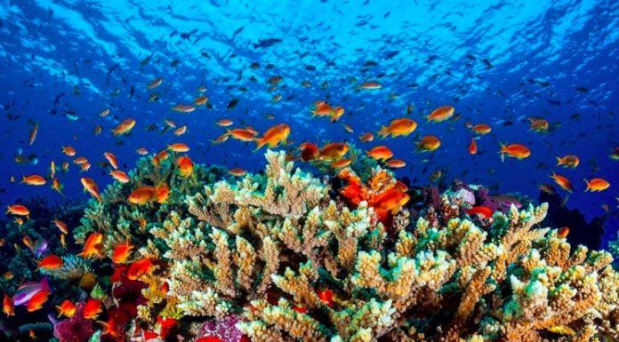 Жизнь в океане - география гидросферы океана