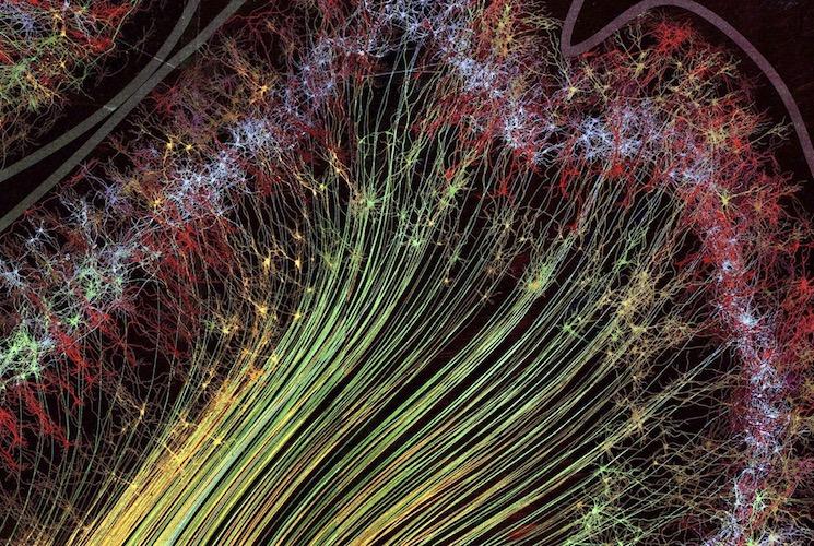 Зона головного мозга с ее сетью, отвечающая за движение и зрительную часть